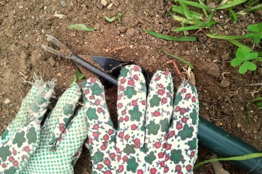 The $2 gardening gloves, ripped after one use. Imagine that!